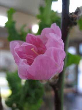 momonohana060301.jpg